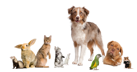 cats_dogs_rodents_birds.png